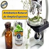 Es una hierba exótica 🌿que funciona como un antibiótico 💊efectivo de amplio espectro. #YoSoyNfn #naturalforcesnutriproducts #GoldenSeal #NFNPanama 🇵🇦 #NFNMiami 🇺🇸 #NFNVenezuela 🇻🇪 #NFNColombia 🇨🇴