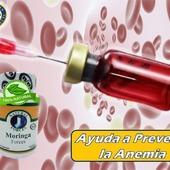 Entre los numerosos componentes de la moringa se encuentran vitaminas del grupo B, C y hierro, que nos ayudan a prevenir la anemia ferropénica al evitar la carencia de estos nutrientes en los casos de dieta desequilibrada. La combinación de la vitamina C y el hierro en moringa favorece la absorción de este último.  #YoSoyNFN#NaturalForcesNutriproducts#MoringaForces  #NFNPanama 🇵🇦 #NFNMiami 🇺🇸 #NFNVenezuela 🇻🇪 #NFNColombia 🇨🇴